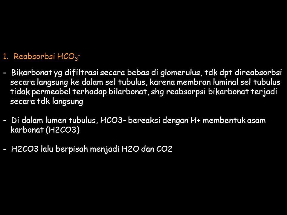 Reabsorbsi HCO3- - Bikarbonat yg difiltrasi secara bebas di glomerulus, tdk dpt direabsorbsi.