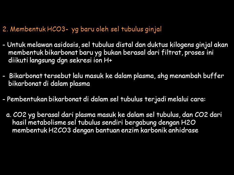 2. Membentuk HCO3- yg baru oleh sel tubulus ginjal