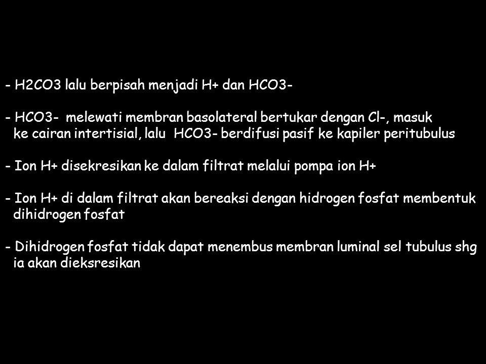 - H2CO3 lalu berpisah menjadi H+ dan HCO3-