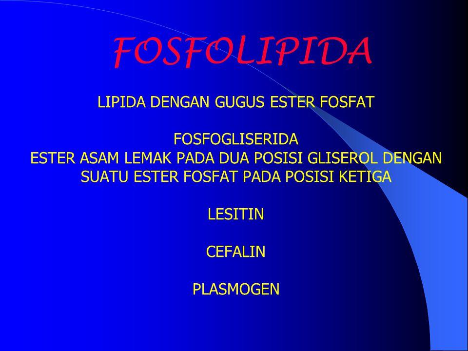 FOSFOLIPIDA LIPIDA DENGAN GUGUS ESTER FOSFAT FOSFOGLISERIDA ESTER ASAM LEMAK PADA DUA POSISI GLISEROL DENGAN SUATU ESTER FOSFAT PADA POSISI KETIGA LESITIN CEFALIN PLASMOGEN
