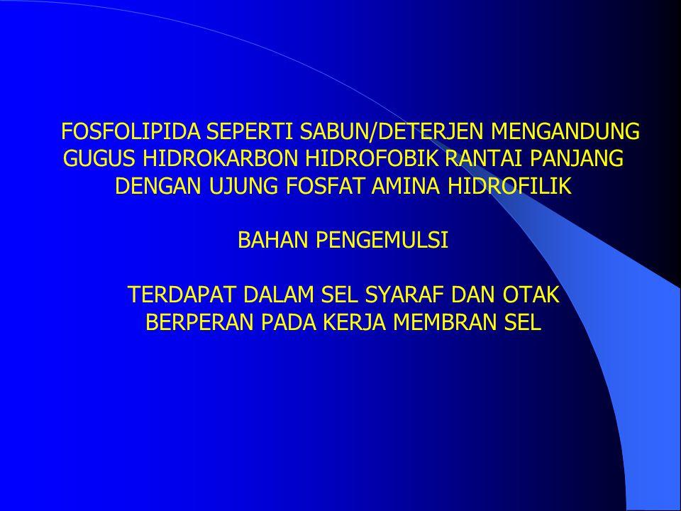 FOSFOLIPIDA SEPERTI SABUN/DETERJEN MENGANDUNG GUGUS HIDROKARBON HIDROFOBIK RANTAI PANJANG DENGAN UJUNG FOSFAT AMINA HIDROFILIK BAHAN PENGEMULSI TERDAPAT DALAM SEL SYARAF DAN OTAK BERPERAN PADA KERJA MEMBRAN SEL