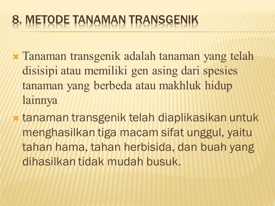 8. Metode tanaman transgenik