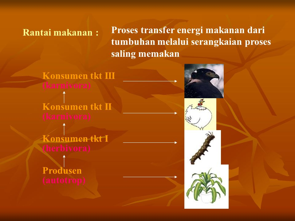 Proses transfer energi makanan dari tumbuhan melalui serangkaian proses saling memakan
