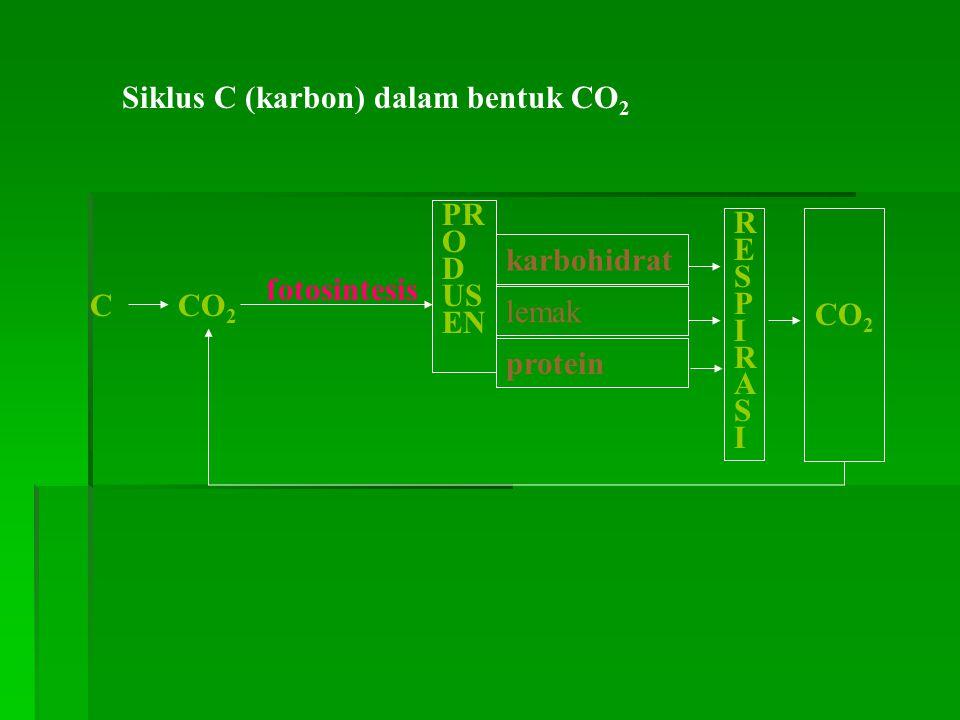 Siklus C (karbon) dalam bentuk CO2