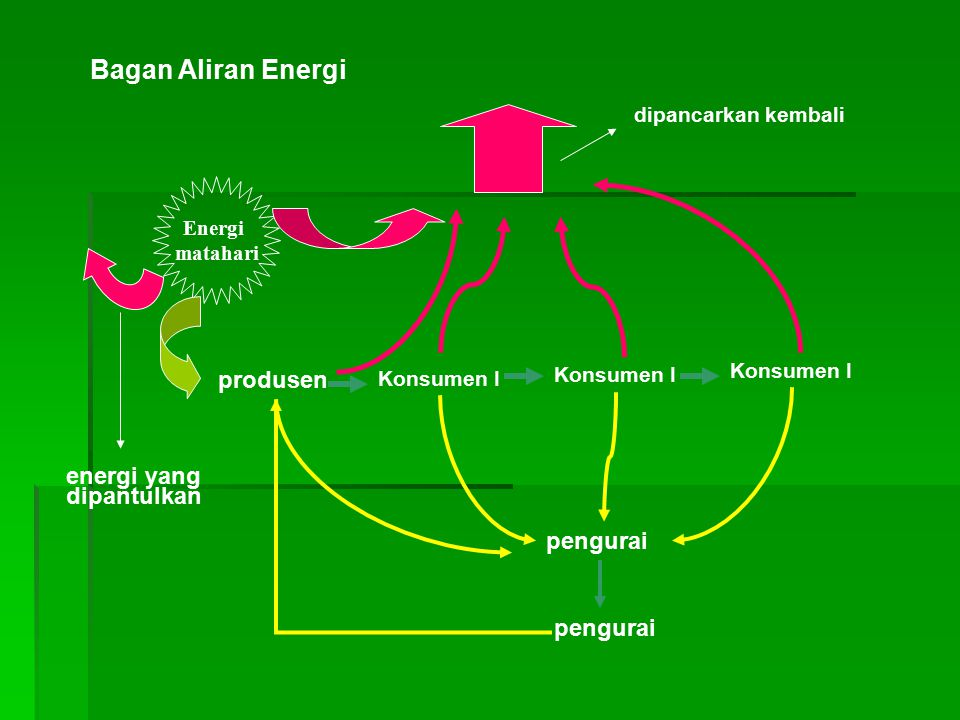 Bagan Aliran Energi produsen energi yang dipantulkan pengurai pengurai