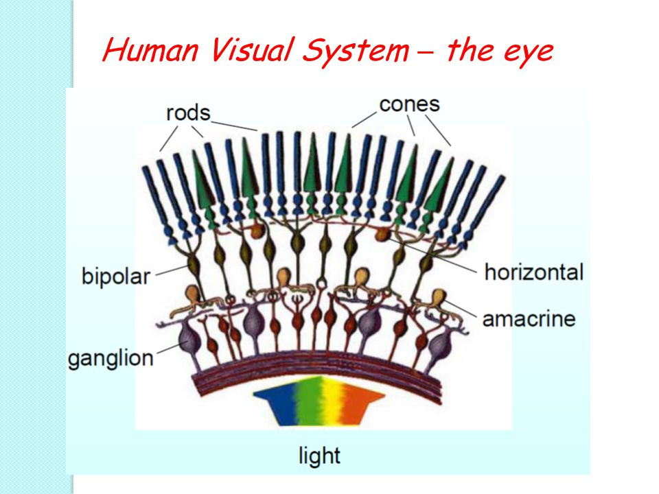 Human Visual System – the eye