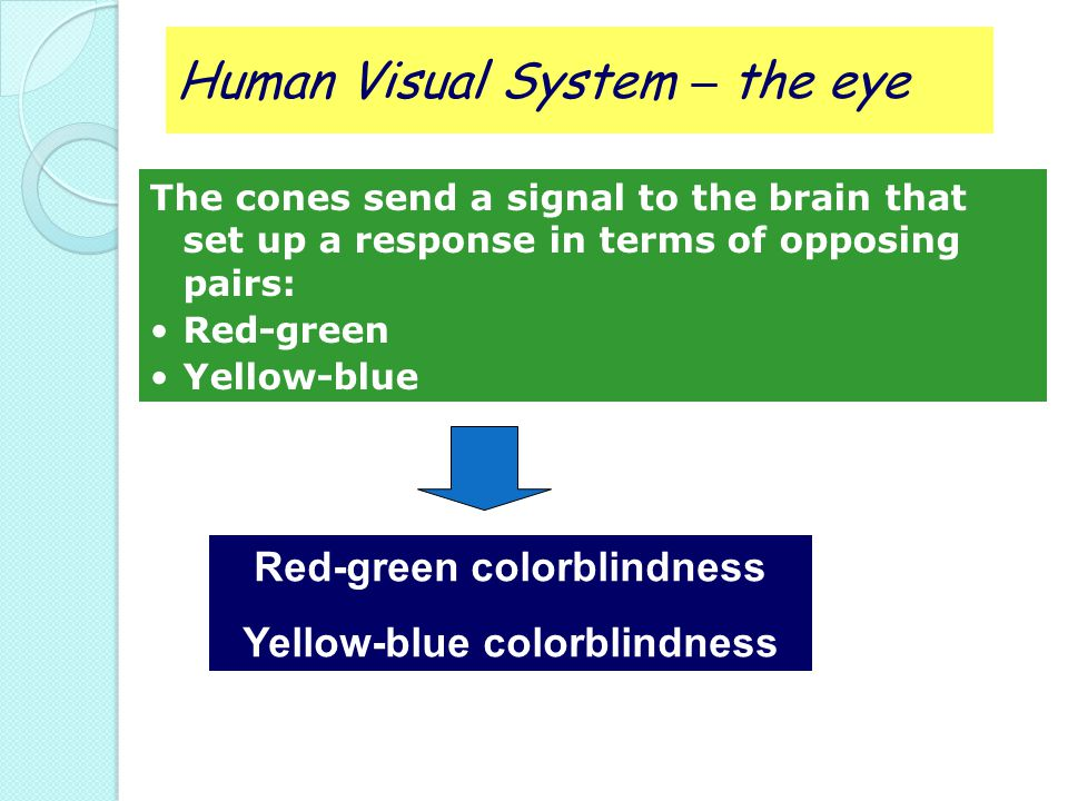 Red-green colorblindness Yellow-blue colorblindness
