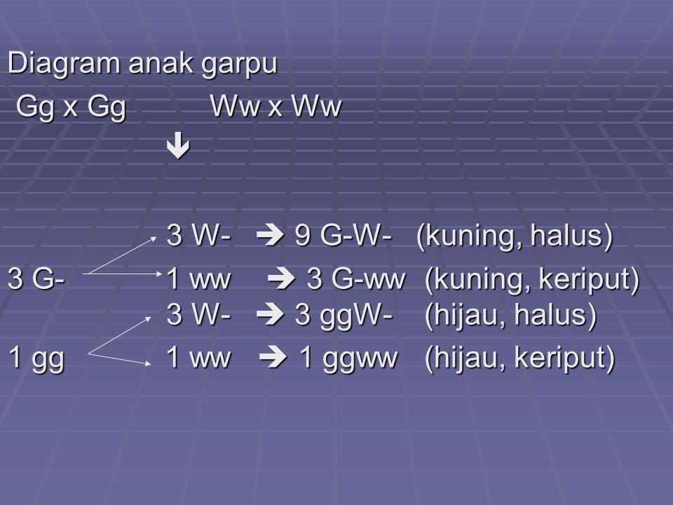 Diagram anak garpu Gg x Gg Ww x Ww.  3 W-  9 G-W- (kuning, halus)