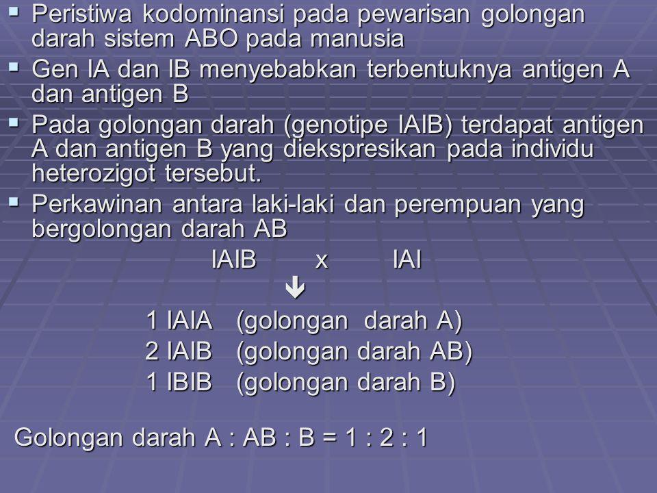 Peristiwa kodominansi pada pewarisan golongan darah sistem ABO pada manusia