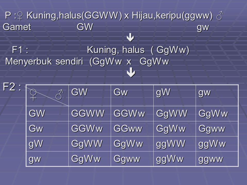 ♀ ♂ F2 : Gamet GW gw  F1 : Kuning, halus ( GgWw)