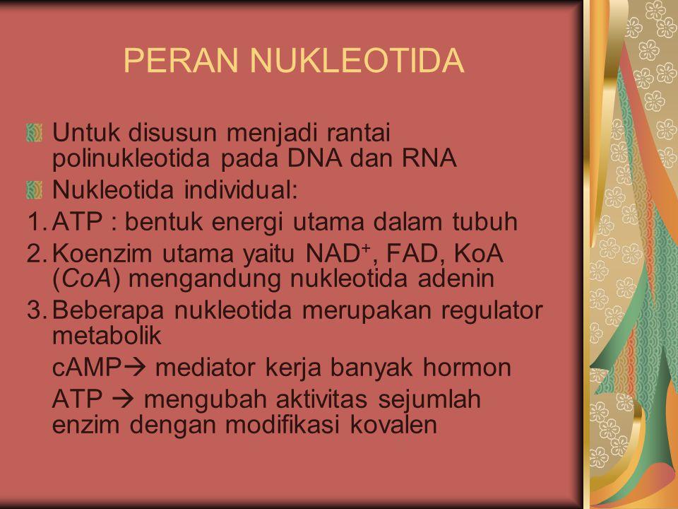 PERAN NUKLEOTIDA Untuk disusun menjadi rantai polinukleotida pada DNA dan RNA. Nukleotida individual: