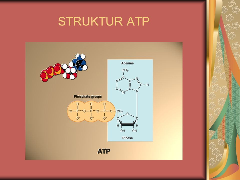 STRUKTUR ATP