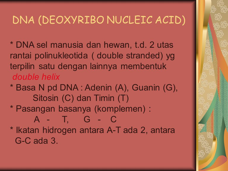 DNA (DEOXYRIBO NUCLEIC ACID)