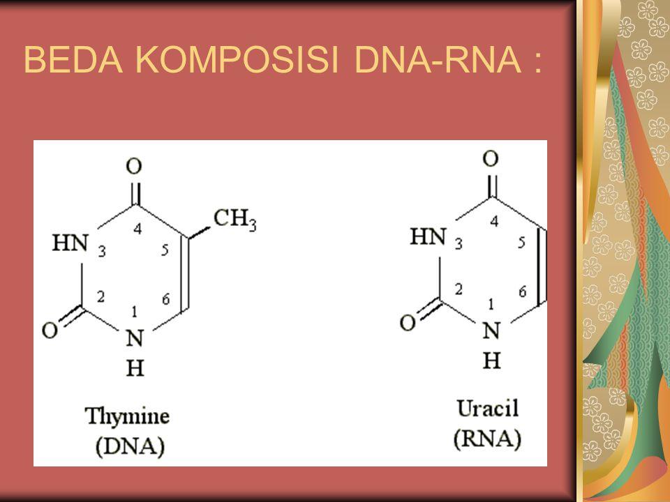 BEDA KOMPOSISI DNA-RNA :