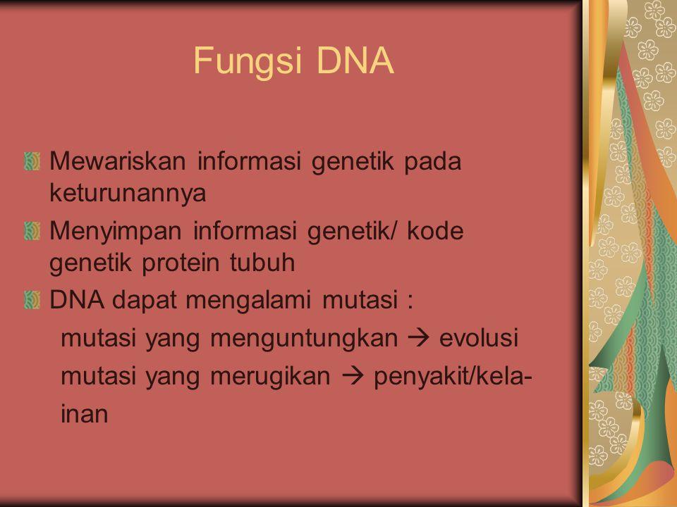 Fungsi DNA Mewariskan informasi genetik pada keturunannya