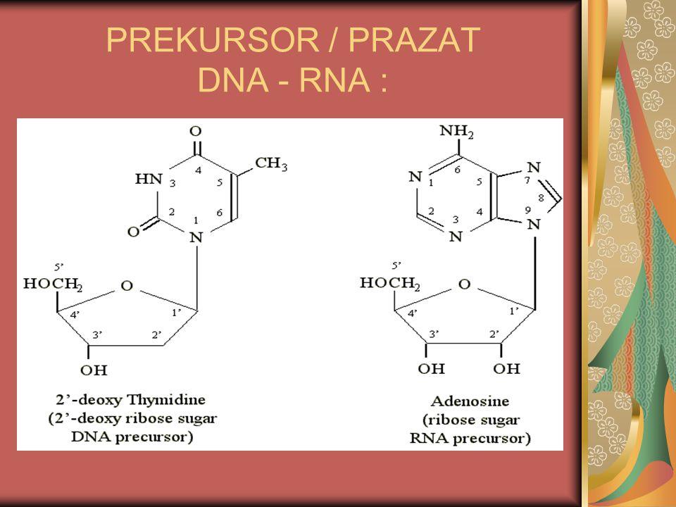 PREKURSOR / PRAZAT DNA - RNA :