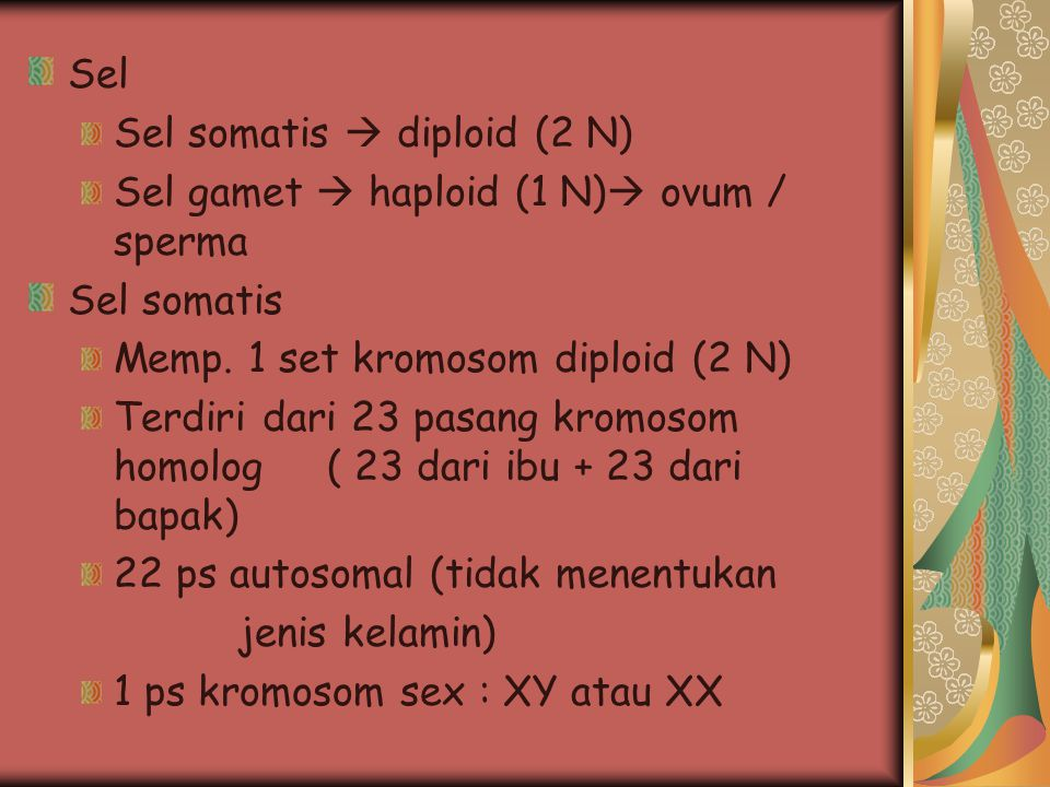 Sel Sel somatis  diploid (2 N) Sel gamet  haploid (1 N) ovum / sperma. Sel somatis. Memp. 1 set kromosom diploid (2 N)