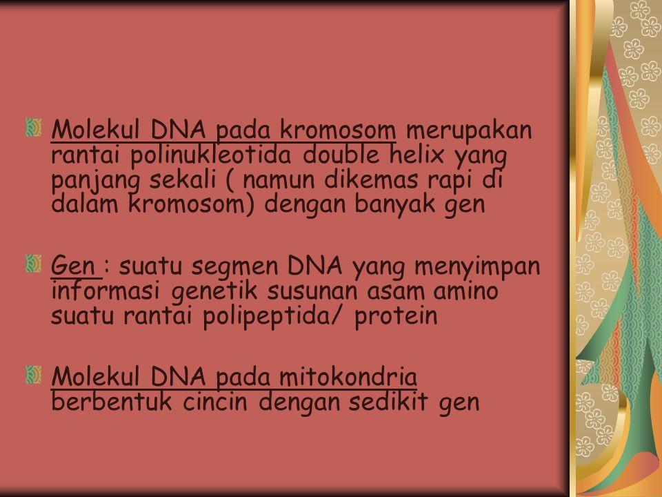 Molekul DNA pada kromosom merupakan rantai polinukleotida double helix yang panjang sekali ( namun dikemas rapi di dalam kromosom) dengan banyak gen