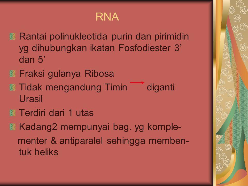 RNA Rantai polinukleotida purin dan pirimidin yg dihubungkan ikatan Fosfodiester 3' dan 5' Fraksi gulanya Ribosa.