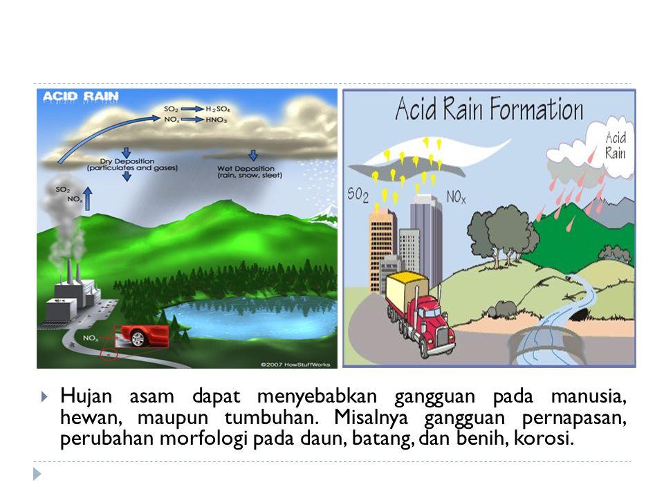 Hujan asam dapat menyebabkan gangguan pada manusia, hewan, maupun tumbuhan.