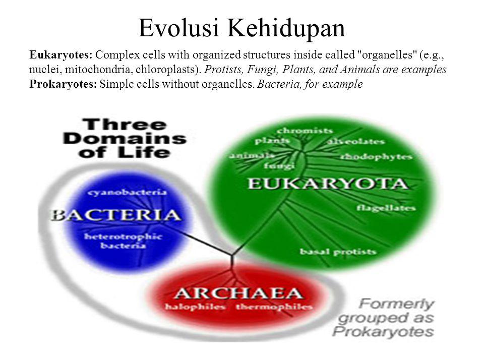 Evolusi Kehidupan