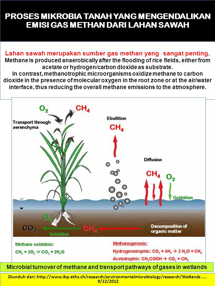 Lahan sawah merupakan sumber gas methan yang sangat penting.