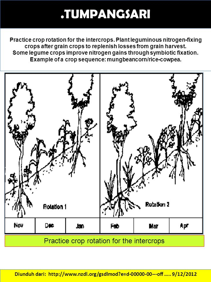 Practice crop rotation for the intercrops