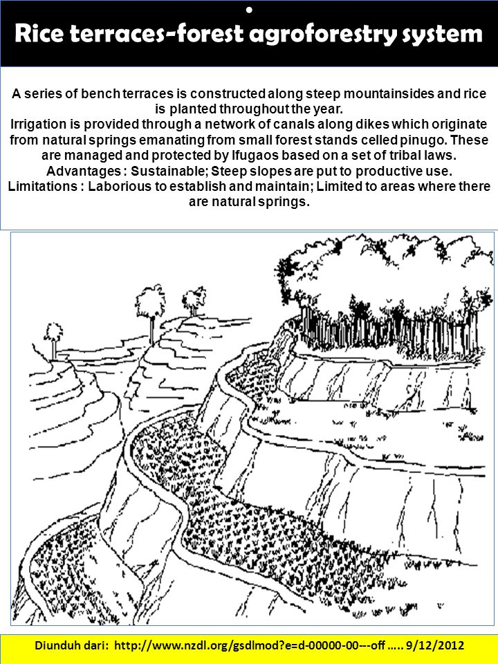 . Rice terraces-forest agroforestry system