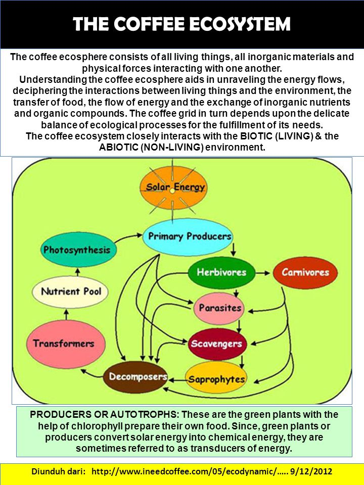 Diunduh dari: http://www.ineedcoffee.com/05/ecodynamic/….. 9/12/2012