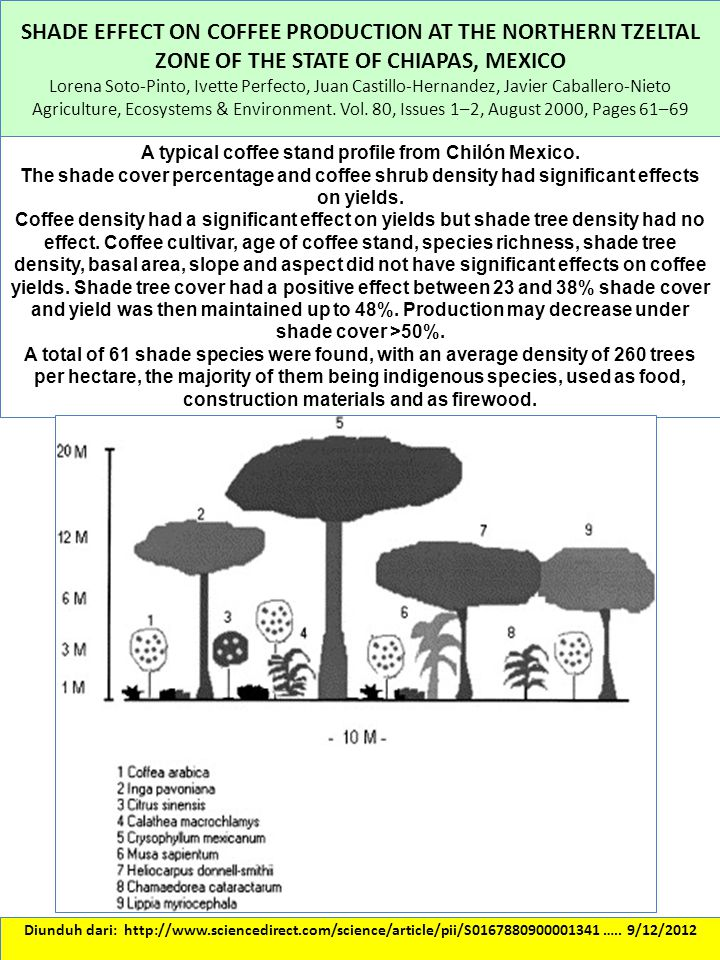 A typical coffee stand profile from Chilón Mexico.