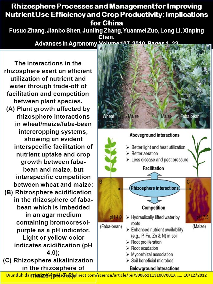 Rhizosphere Processes and Management for Improving Nutrient Use Efficiency and Crop Productivity: Implications for China
