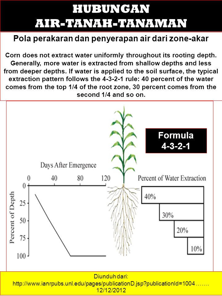 Pola perakaran dan penyerapan air dari zone-akar