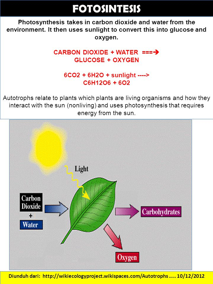CARBON DIOXIDE + WATER === 6CO2 + 6H2O + sunlight ---->
