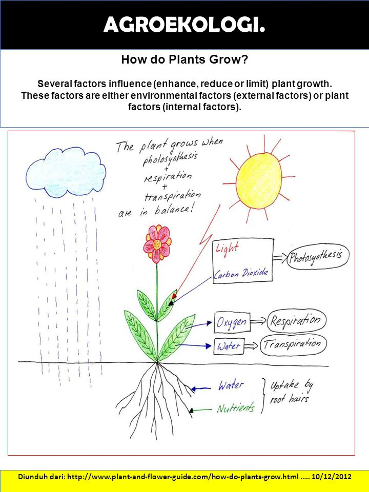 Several factors influence (enhance, reduce or limit) plant growth.