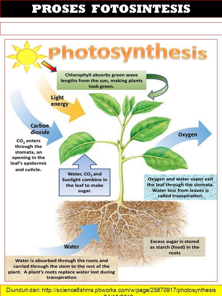 PROSES FOTOSINTESIS Diunduh dari: http://science6shms.pbworks.com/w/page/25870917/photosynthesis …….
