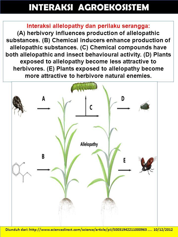 Interaksi allelopathy dan perilaku serangga: