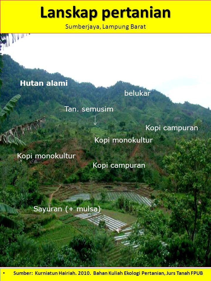 Sumberjaya, Lampung Barat
