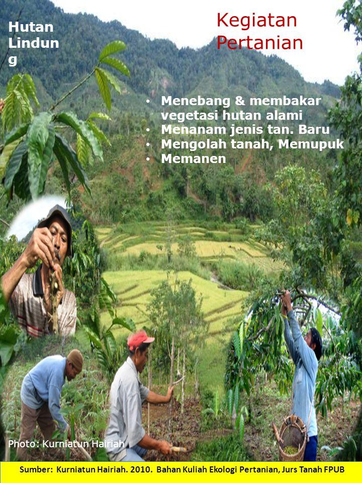 Kegiatan Pertanian Hutan Lindung