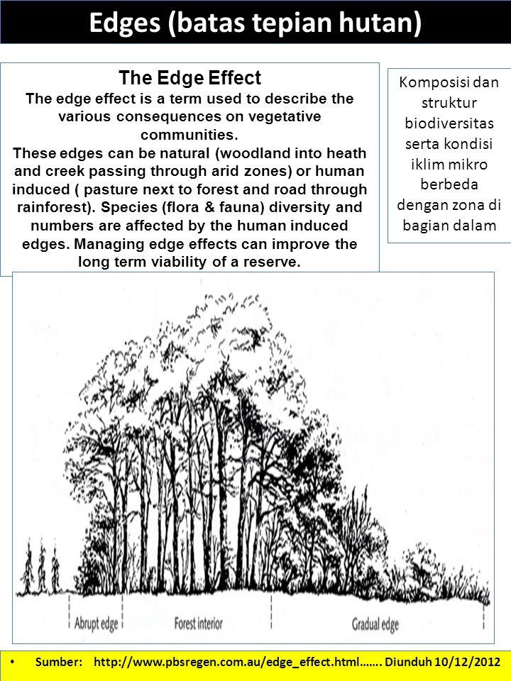 Edges (batas tepian hutan)