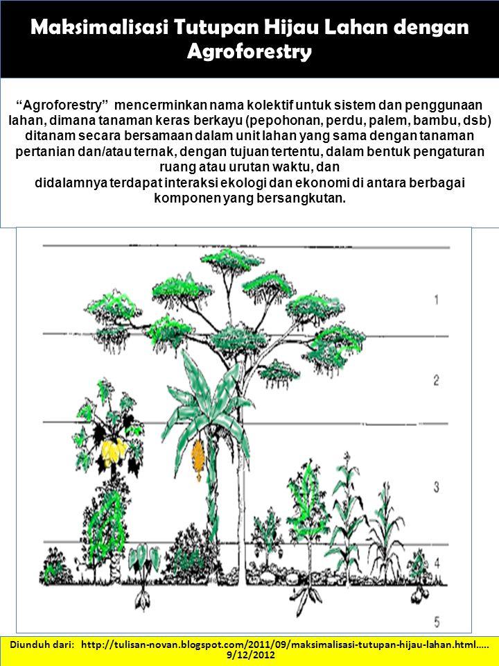Maksimalisasi Tutupan Hijau Lahan dengan Agroforestry