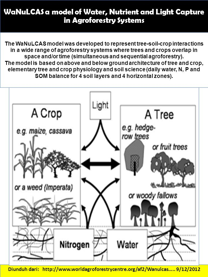 WaNuLCAS a model of Water, Nutrient and Light Capture in Agroforestry Systems