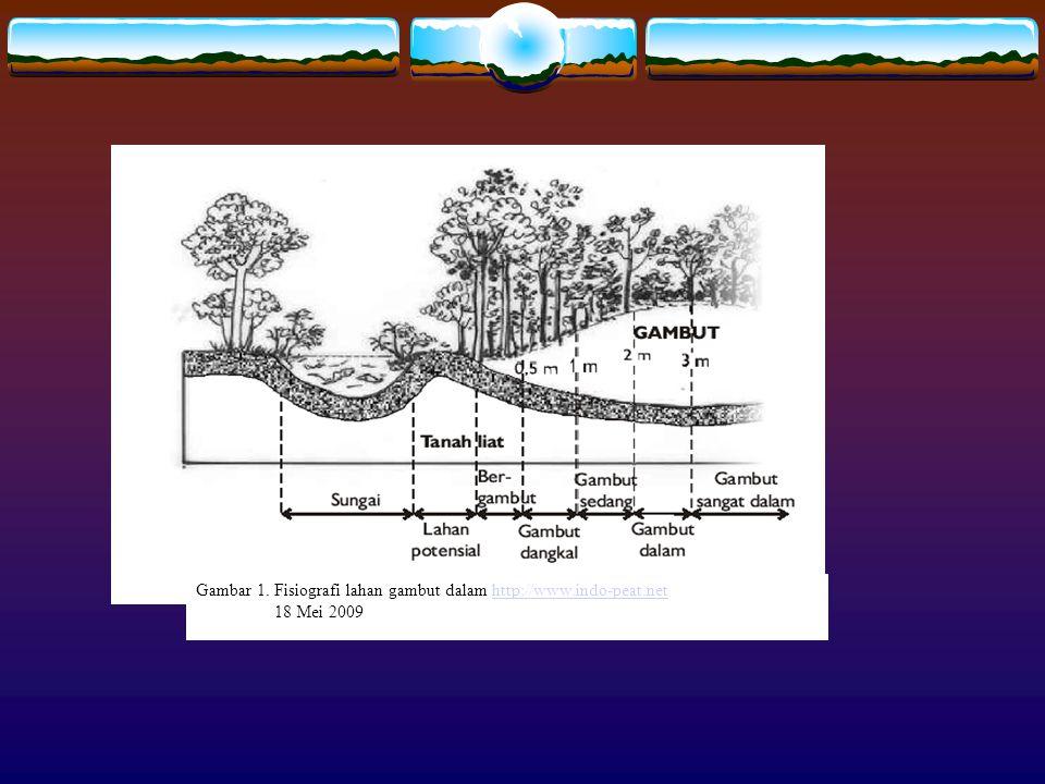 Gambar 1. Fisiografi lahan gambut dalam http://www.indo-peat.net