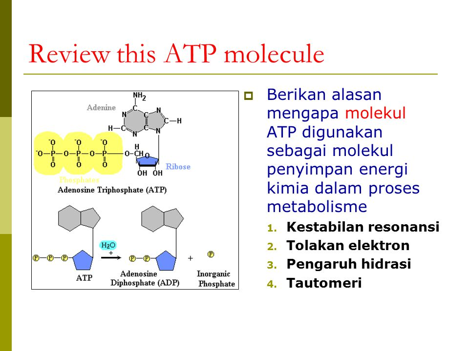 Review this ATP molecule