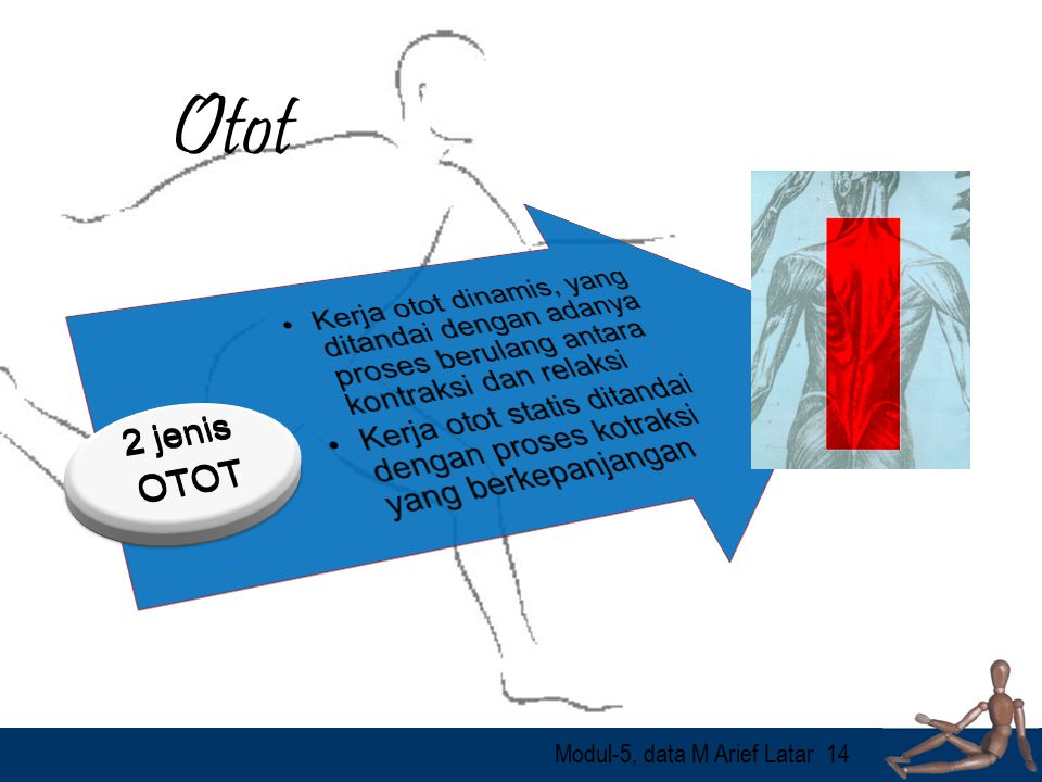 Otot Kerja otot dinamis, yang ditandai dengan adanya proses berulang antara kontraksi dan relaksi.