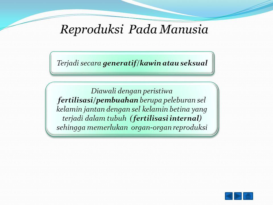 Reproduksi Pada Manusia