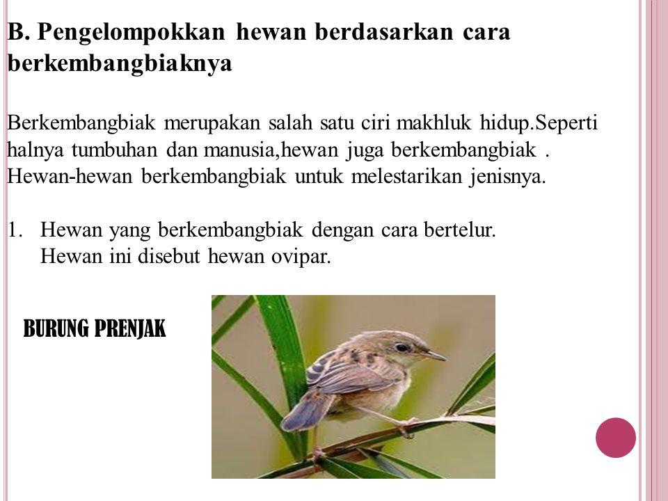 B. Pengelompokkan hewan berdasarkan cara berkembangbiaknya