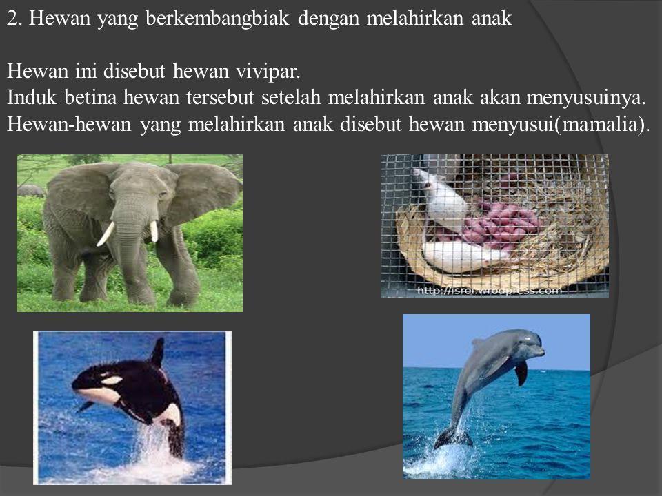 2. Hewan yang berkembangbiak dengan melahirkan anak