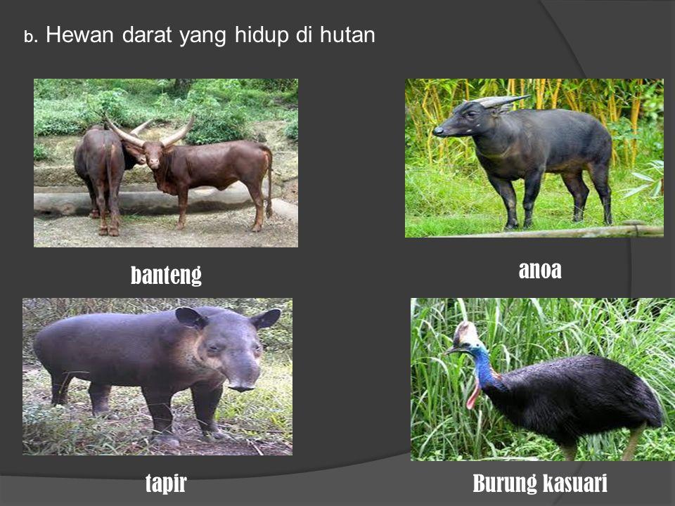 b. Hewan darat yang hidup di hutan