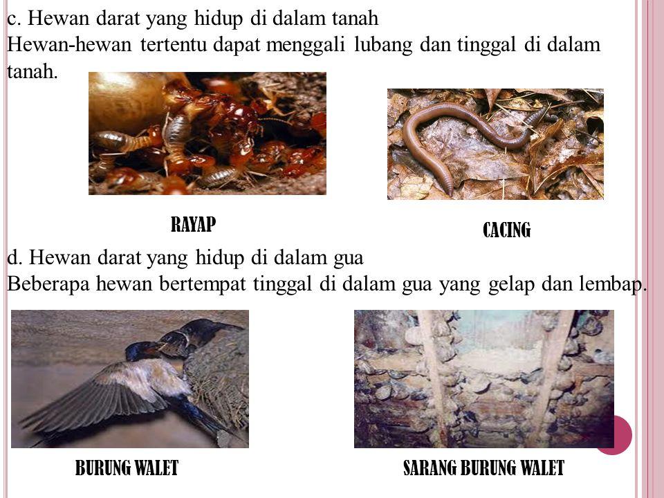c. Hewan darat yang hidup di dalam tanah