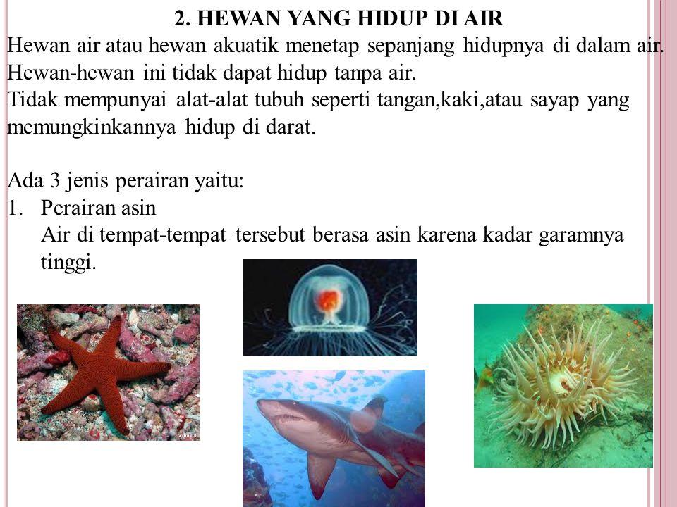 2. HEWAN YANG HIDUP DI AIR Hewan air atau hewan akuatik menetap sepanjang hidupnya di dalam air. Hewan-hewan ini tidak dapat hidup tanpa air.
